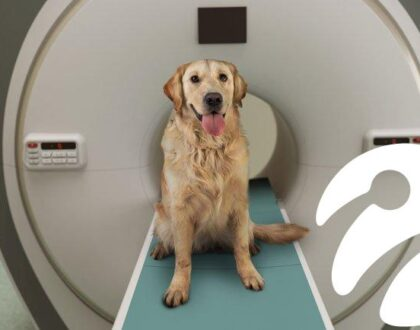 Köpekler sahibinin yüzünü tanır mı? Bilim insanları beyinlerini inceledi!