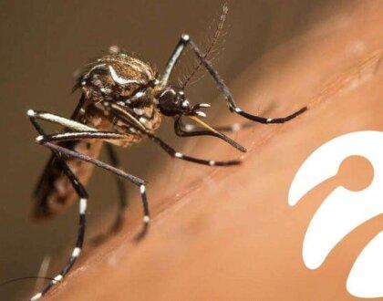Sivrisineklerle, 750 Milyon Sivrisineği Hür Bırakarak Savaşacaklar